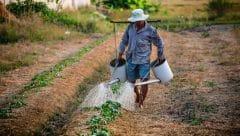 Macrobiótica y soberanía alimentaria