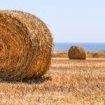 Proporciones de alimentos vegetales y animales en la macrobiótica
