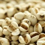 La cebada, el cereal de la primavera