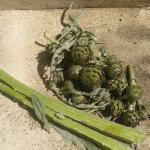 Recetas con alcachofas silvestres y sus propiedades.